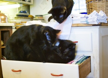 three black cats in drawer