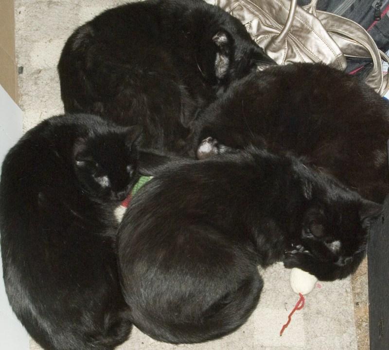four black cats sleeping