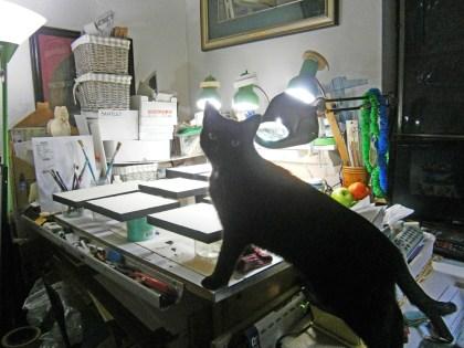black cat looking at art stuff