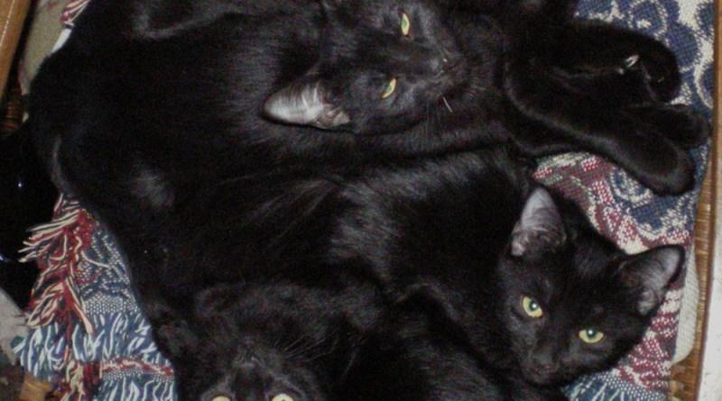 four black kittens on rocker