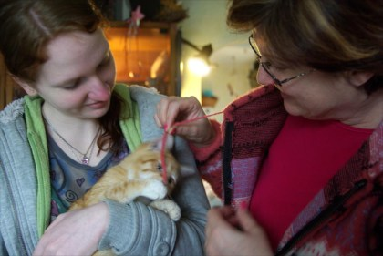 orange kitten is adopted