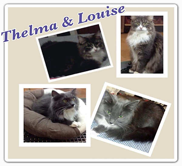 Cats For Adoption Thelma And Louise Urgently Need A Home And Sassy