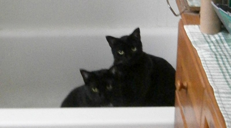 two black cats in tubn