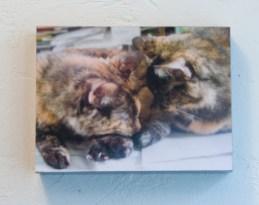 two tortoiseshell cats