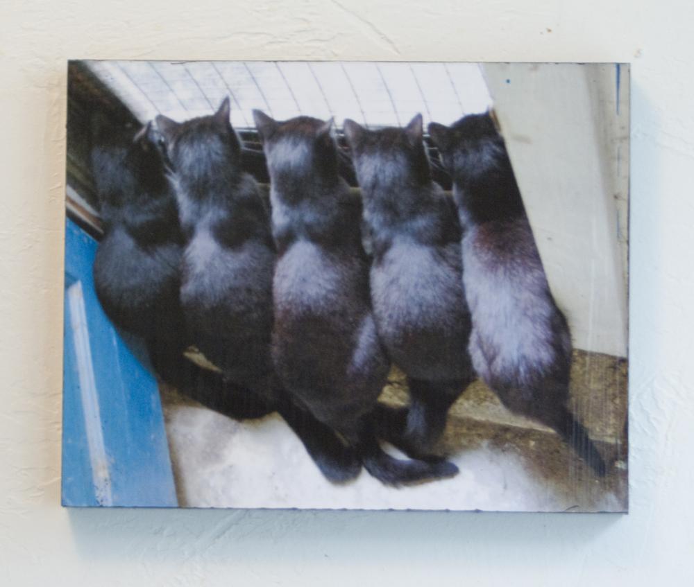 five black cats at the door