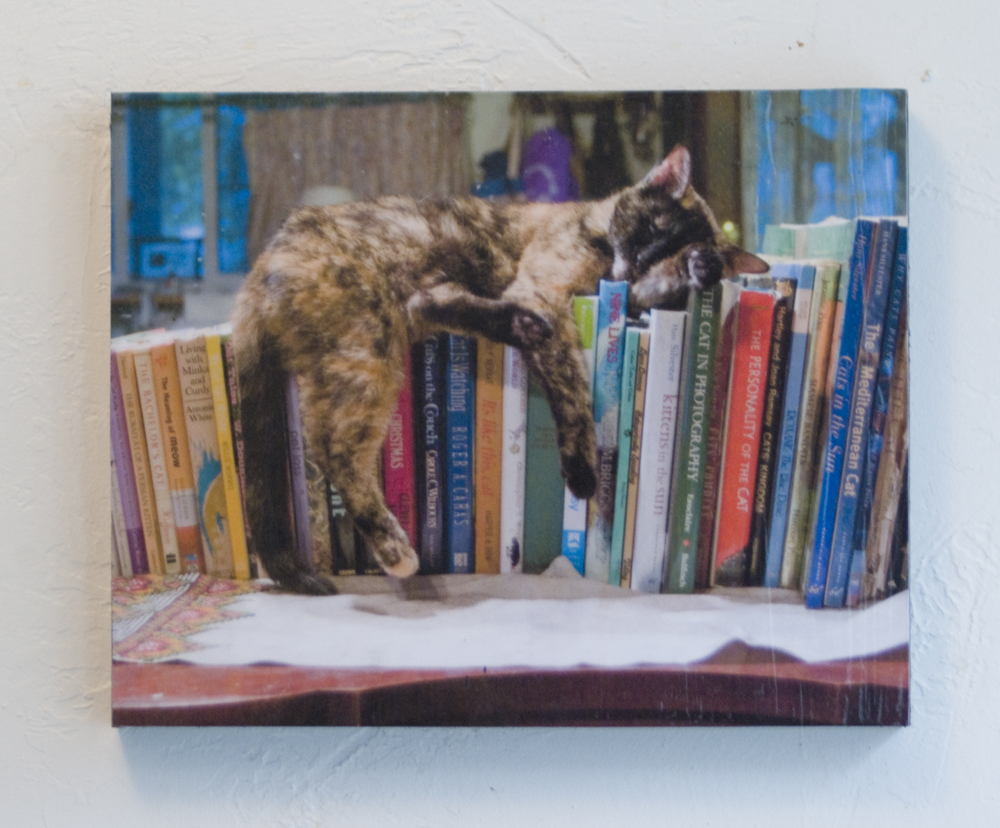 photo of cat sleeping on books