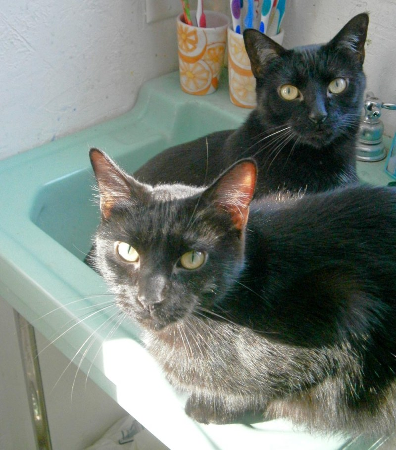 two black cats in green sink