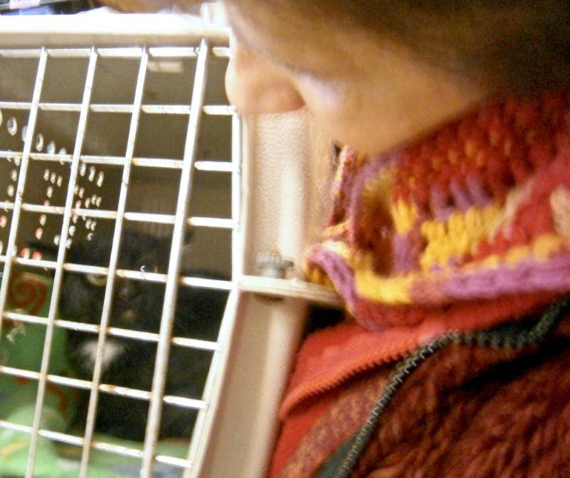 feral kitten in cage
