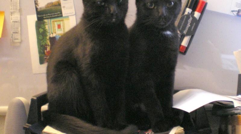 two black kittens in inbox