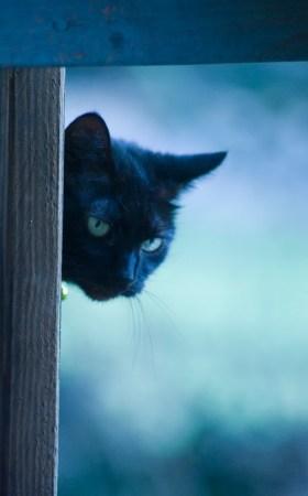 black cat looking through deck railing