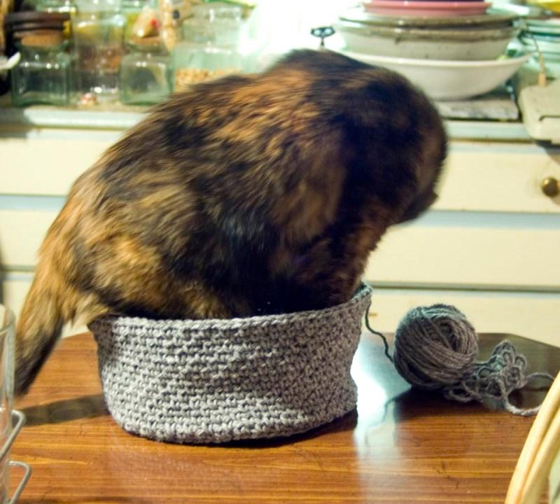 tortoiseshell cat in crocheted hat