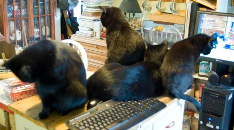 four black cats around computer keyboard