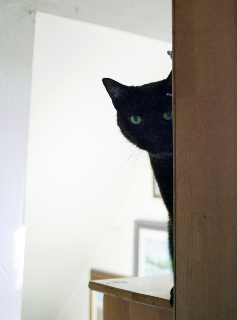 black cat peeking around doorway