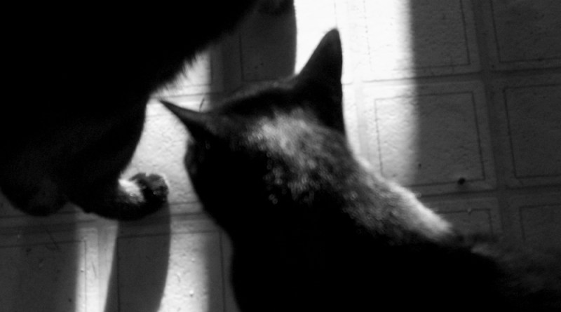 two black cats in sunlight black and white