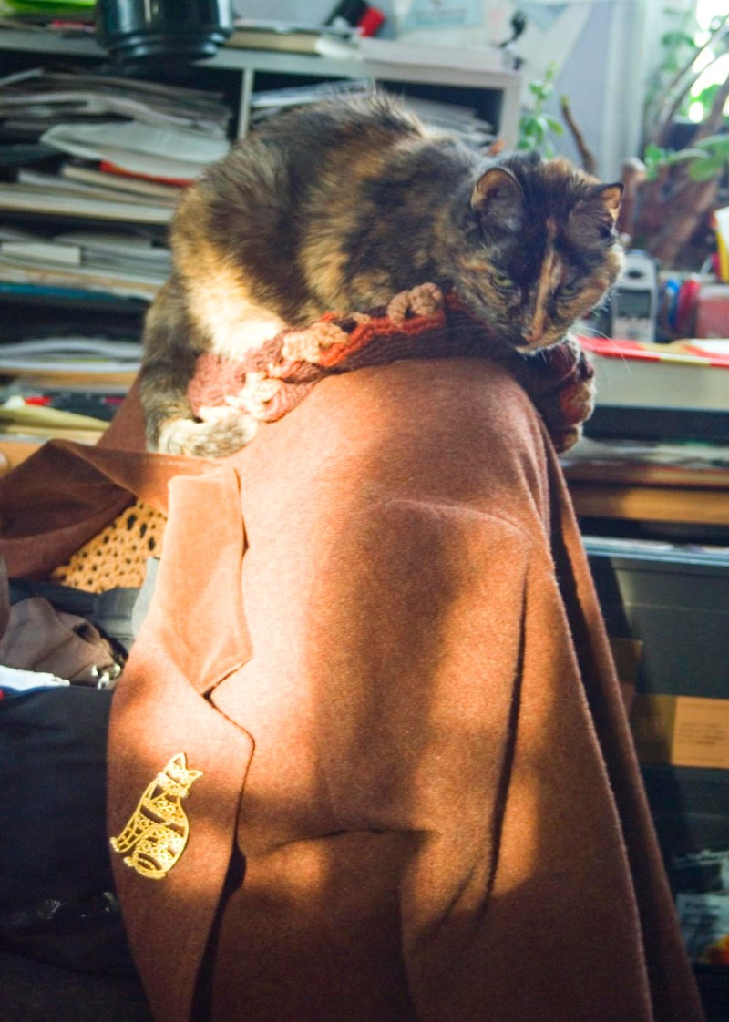 tortoiseshell cat curled up on hat on coat on chair