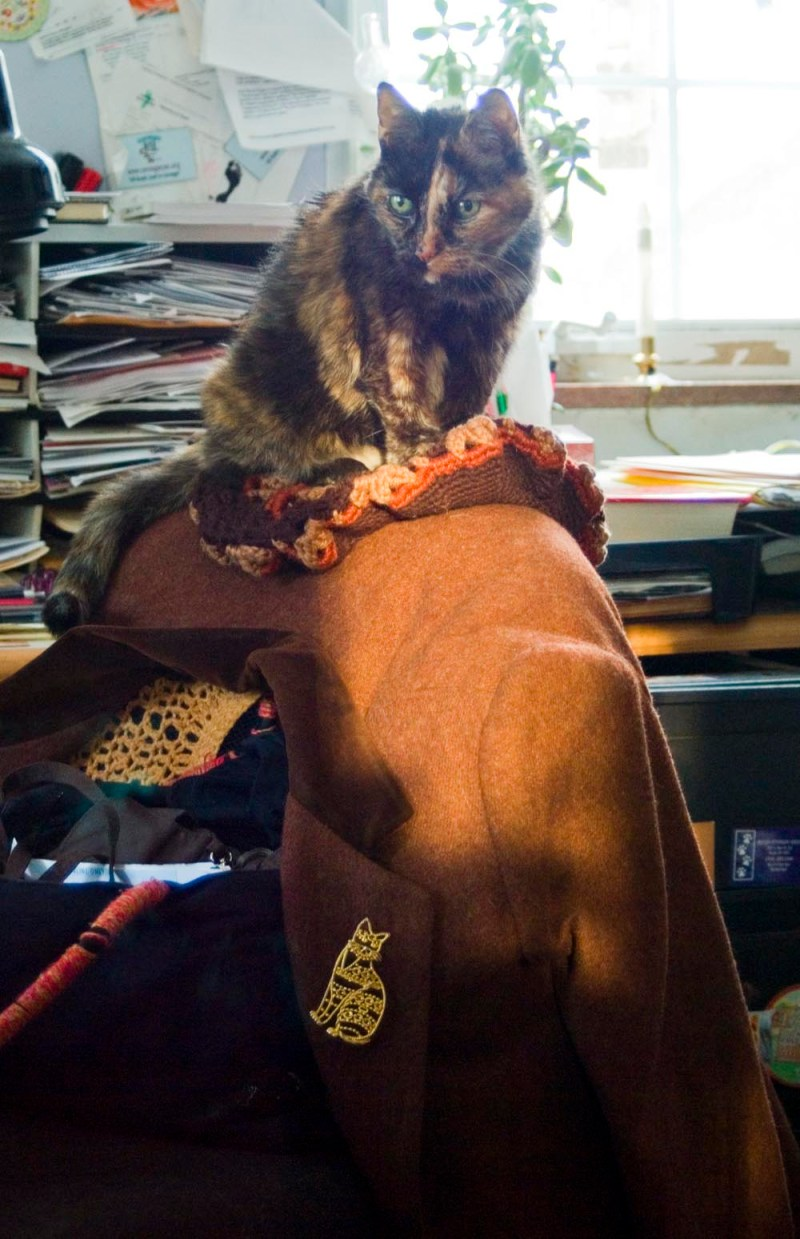 tortoiseshell cat sitting on hat and coat on chair