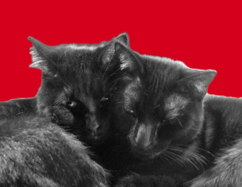valentine with two black cats on red