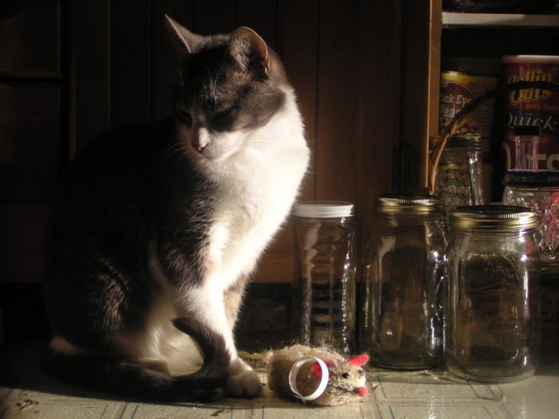 cat with jars