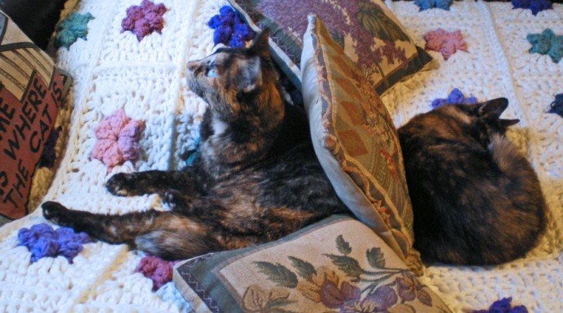 two tortoiseshell cats on bed
