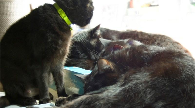 four black cats.