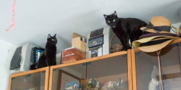 two black cats on entertainament center
