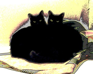 posterized image of two black cats