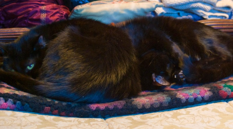 two black catson afghan