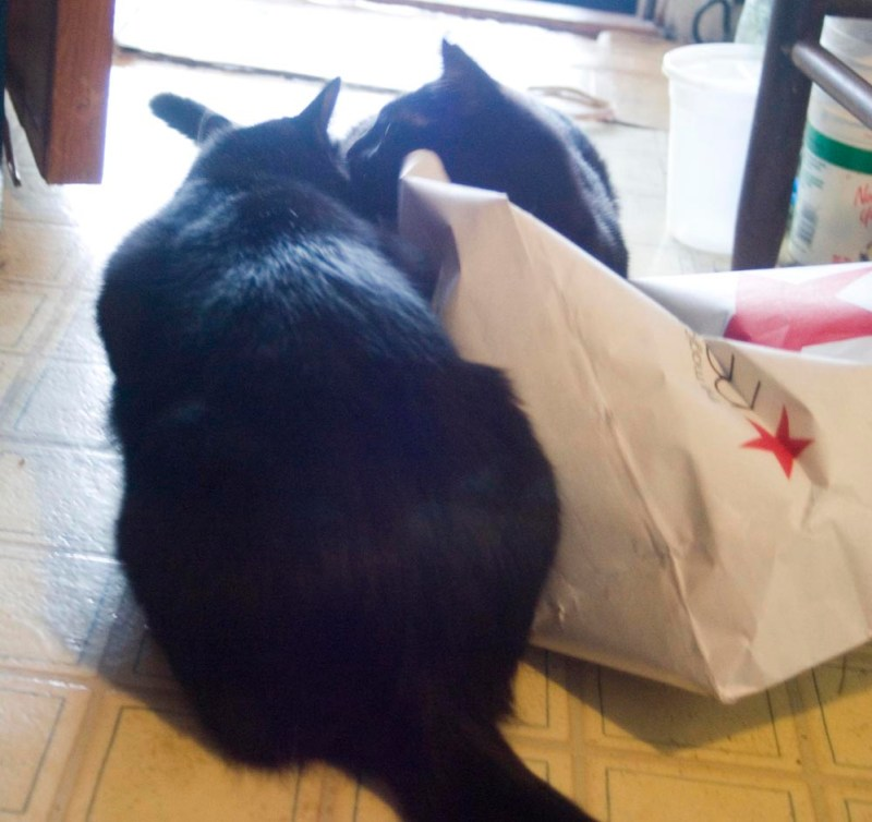 two black cats on bag