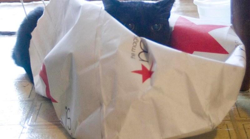 black cat on macy's bag