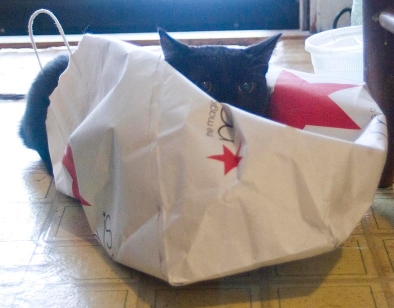 black cat on macy's bag
