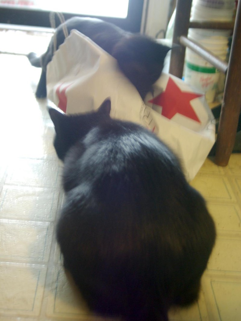 two black cats and macy's bag