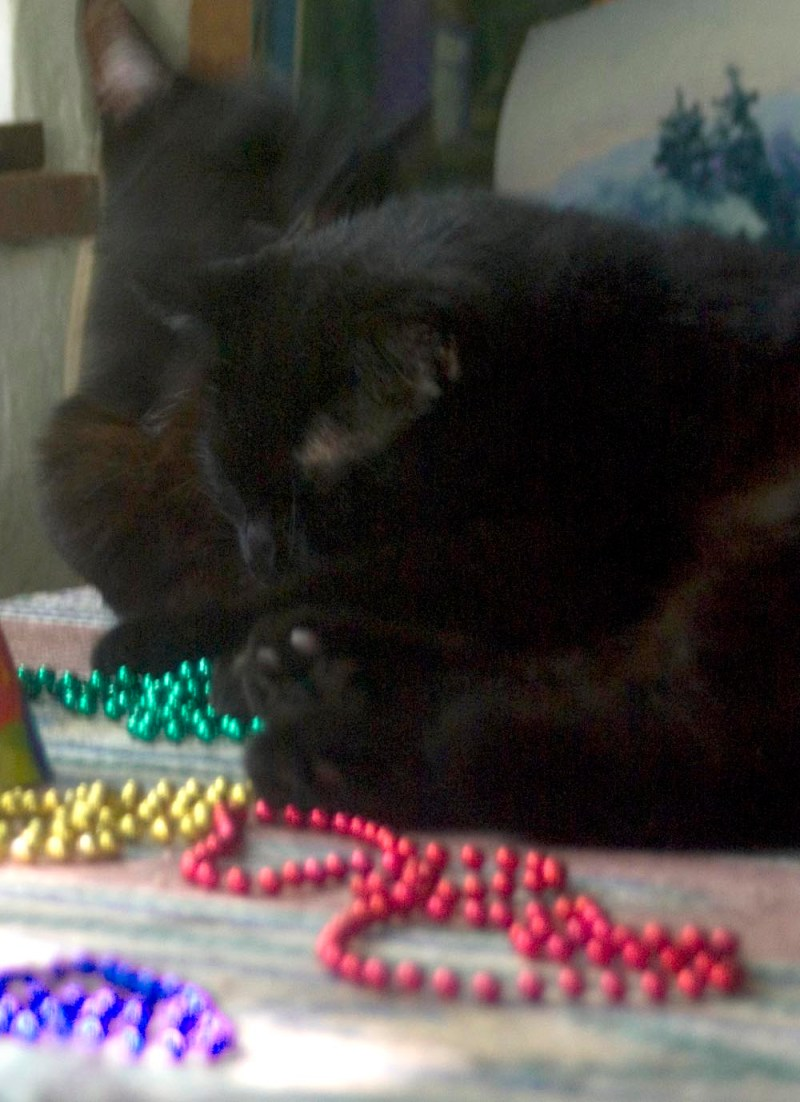 two black cats and colored beads