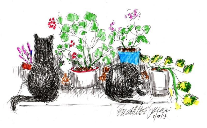 ink and marker sketch of two cats and flowers