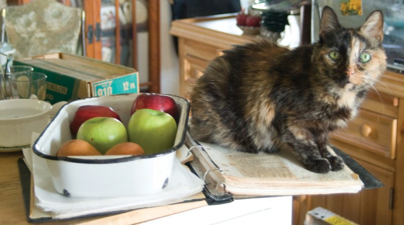 tortoiseshell cat on cookbook