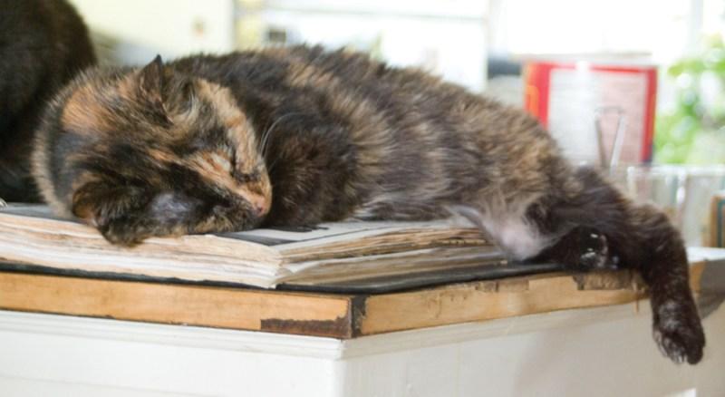 tortoiseshell cat sleeping on cookbook