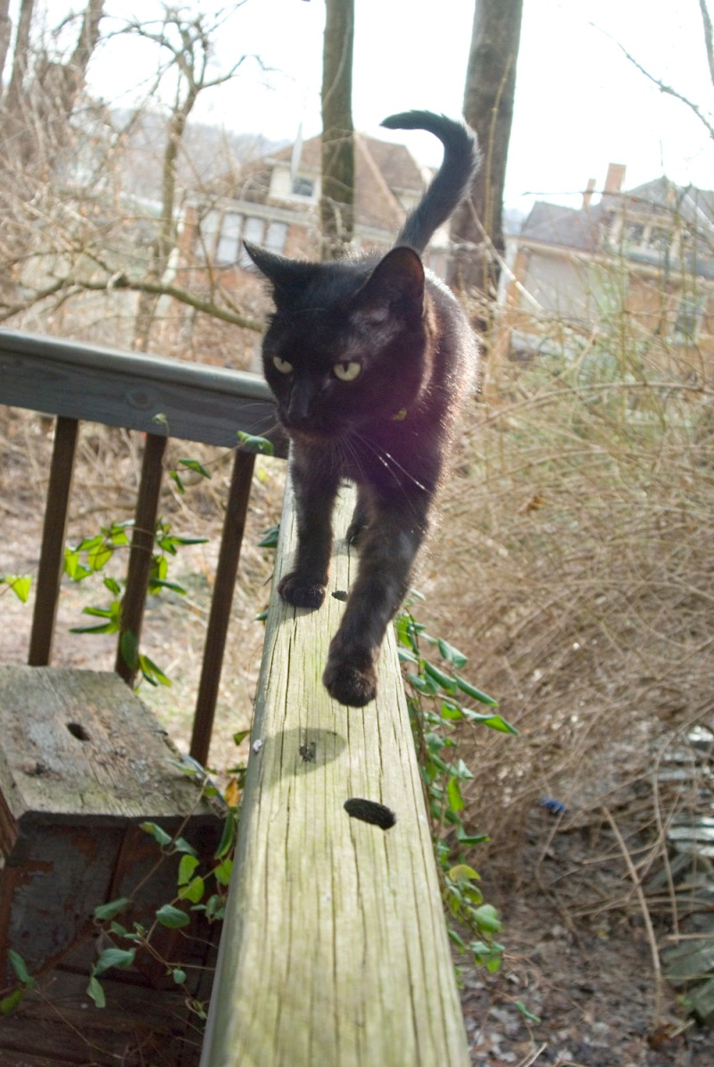black cat on deck railing