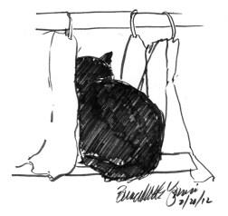 ink sketch of cat peeking through curtains