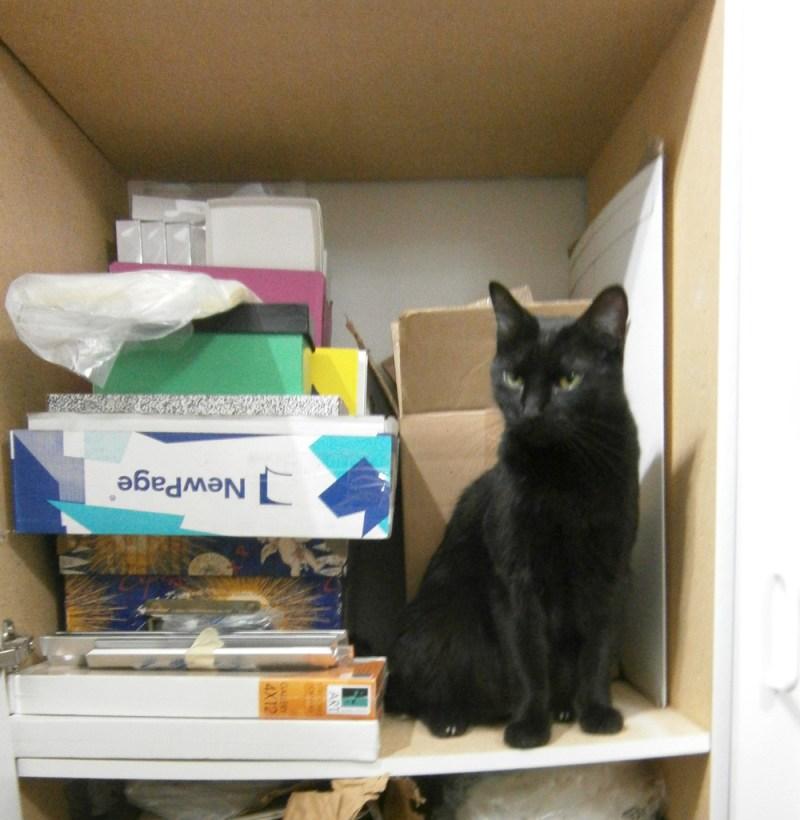 black cat in cabinet