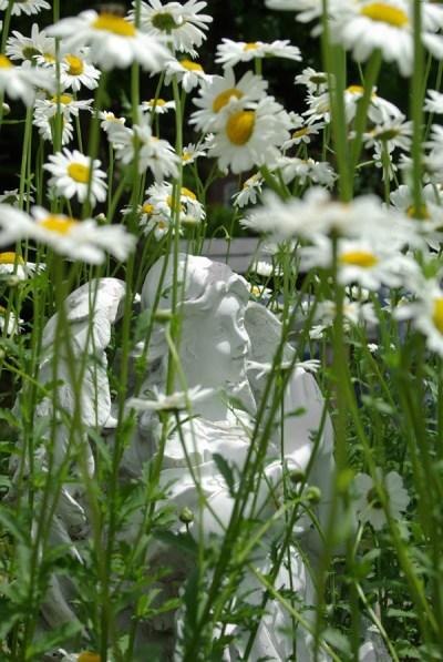 Angel Daisies © B.E. Kazmarski