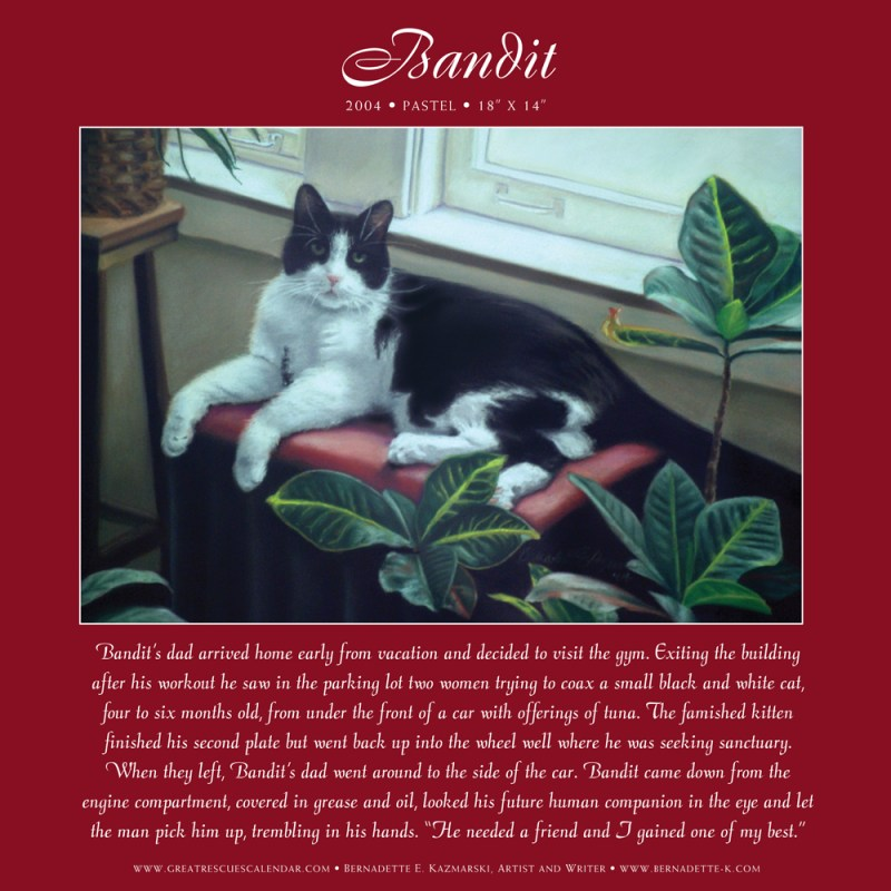 Bandit's page in the Great Rescues Day Book.