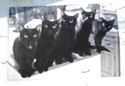"""""""Five Black Cats in a Line"""" black and white side of laminated placemat."""