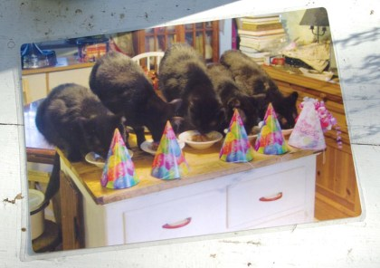 laminated placemat with five black cats at birthday party