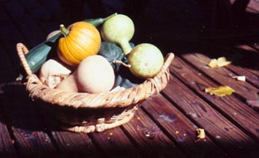 basket of squashes and gourds