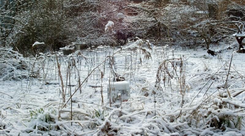 photo of garden and yard under snow