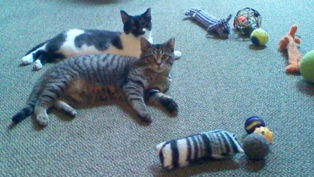 two kittens with toys