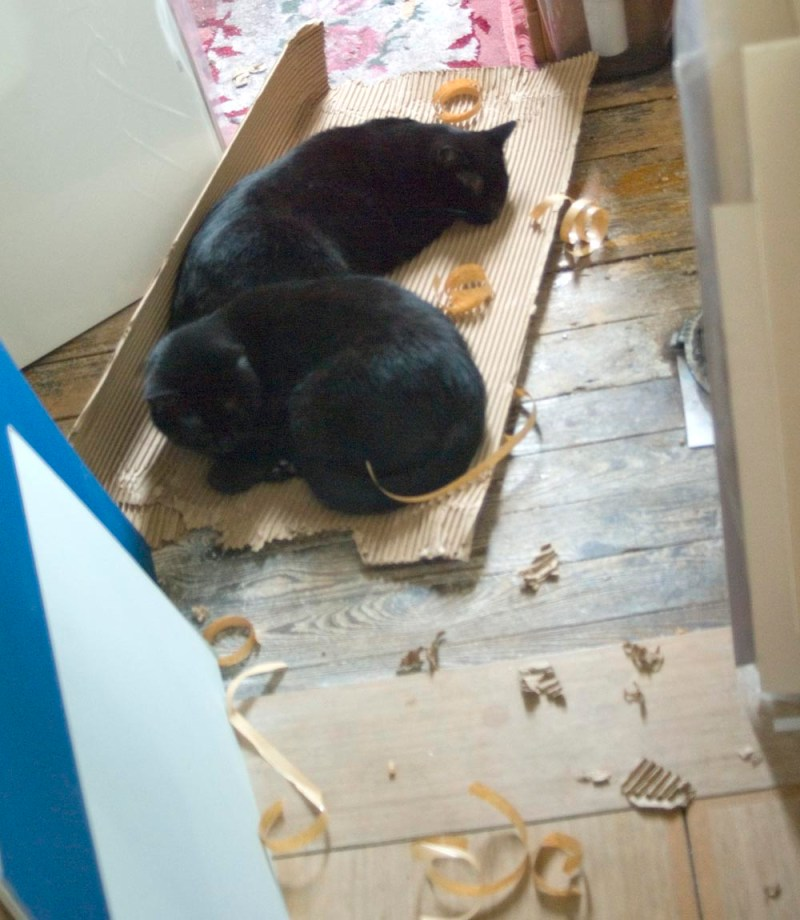two black cats asleep