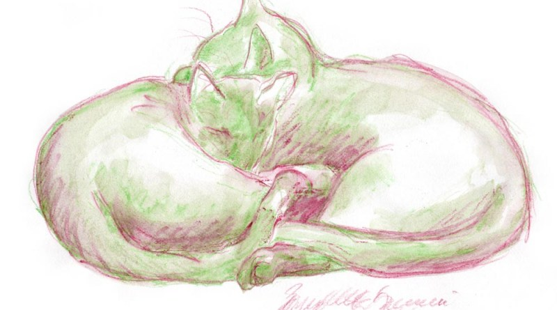watercolor and pencil sketch of two cats cuddling