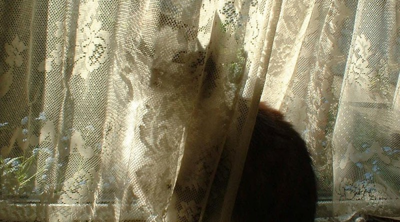 cat behind lace curtain