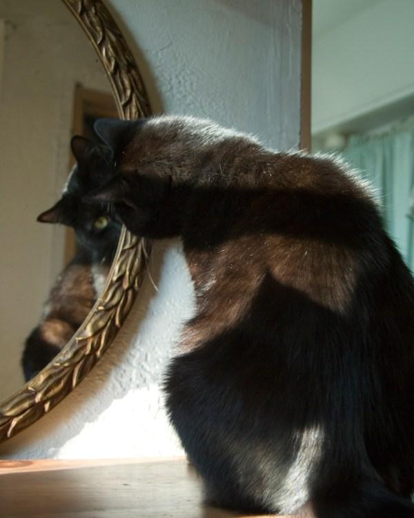 black cat looking at herself in mirror