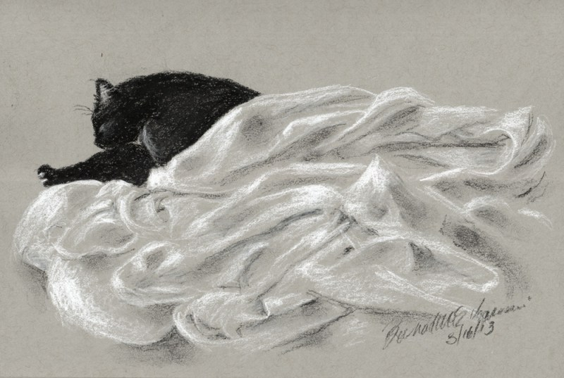 charcoal sketch of cat on tinted paper